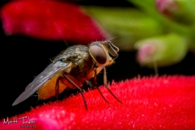 006 - Backyard bugs - 20151121-Edit-2