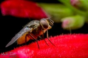006 - Backyard bugs - 20151121-Edit-2