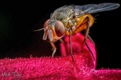 029 - Backyard bugs - 20151121-Edit