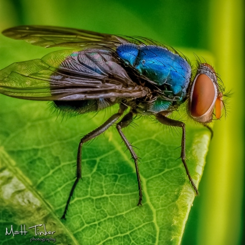 032 - Backyard bugs - 20151121-Edit