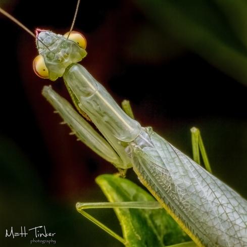 065 - Backyard bugs - 20151121-Edit