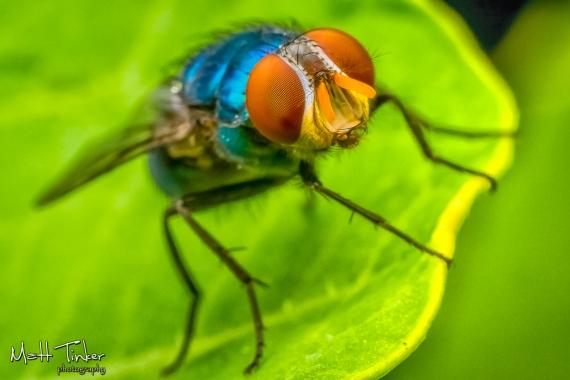 075 - Backyard bugs - 20151121-Edit