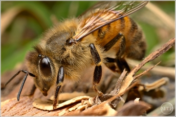 Bee 2 - Matt Tinker