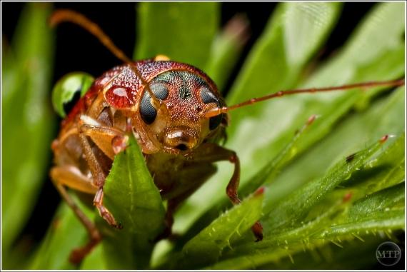 Beetle 1 - Matt Tinker