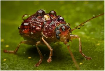 beetle 2 - Matt Tinker