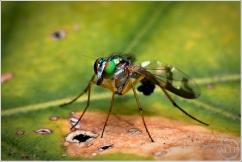 Blue Fly - Matt Tinker