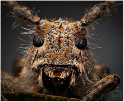 Bug - Matt Tinker