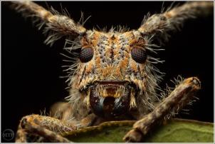 Bug on orange 3 - Matt Tinker