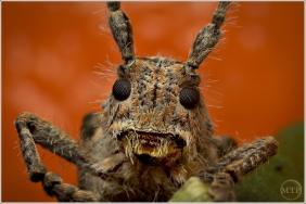 Bug on Orange 4 - Matt Tinker