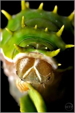 Caterpillar 5 - Matt Tinker