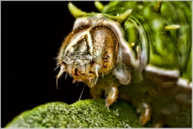 Caterpillar 6 - Matt Tinker