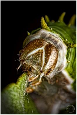 Caterpillar 7 - Matt Tinker