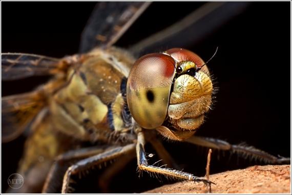 Dragonfly 1 - Matt Tinker