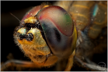 Dragonfly 2 - Matt Tinker