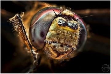 Dragonfly 3 - Matt Tinker