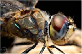 Dragonfly 4 - Matt Tinker