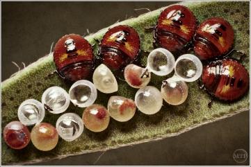 Eggs 4 - Matt Tinker
