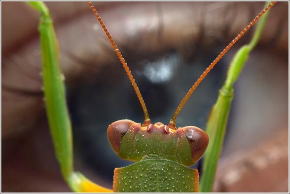 Mantis - Matt Tinker