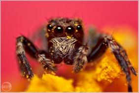 Pollen Bath - Matt Tinker