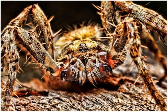 Spiders - Matt Tinker