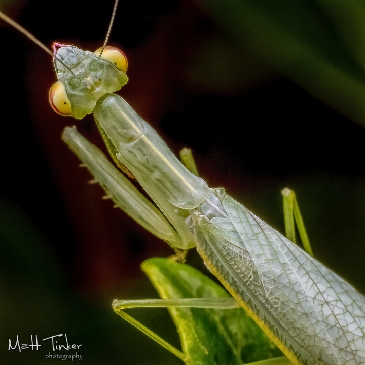 065 - Backyard bugs - 20151121-Edit